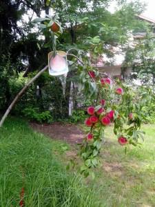 pianta da frutto villa conigli