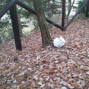 primo piano coniglio bianco
