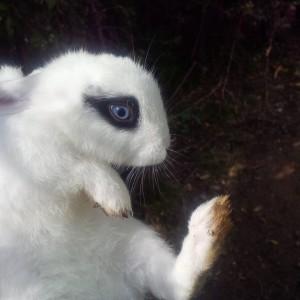primo piano coniglio bianco e nero